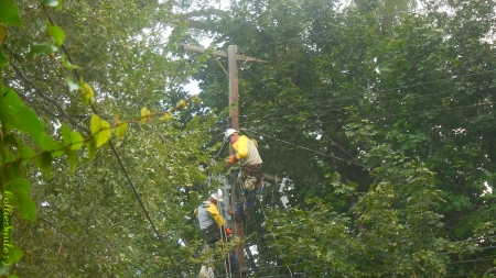 Power Repair In my Backyard - power pole, trees, men working, utility pole, wires