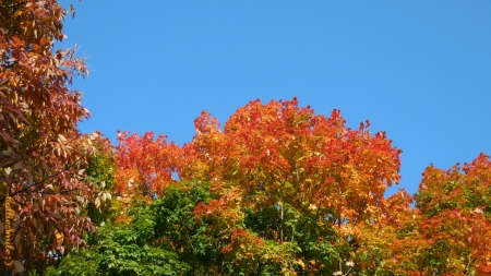 Beautiful Autumn Day - scarlet, colors, blue sky, trees, blue, orange, skies, leaves, green, Fa11, Autumn