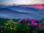 Sunrise on the sea of clouds with flowers