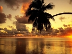 Magnificent tropical sunset