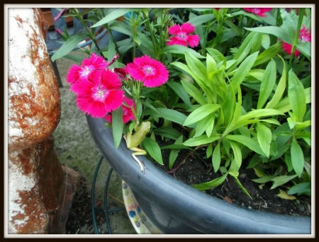 FROG IN FLOWER POT - CUTE, FROG, GREEN, LITTLE
