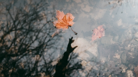 Floating Leaf - Fall, water, Autumn, leaf, reflection