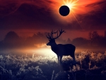 Deer During a Eclipse of the Sun