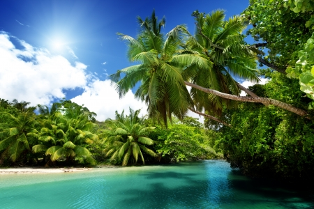♥ - sun, tropical, se, palm trees