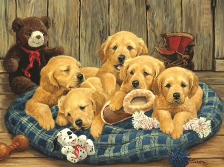 Puppies - young, paint, dogs, golden
