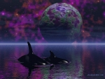 whales-art-beautiful-killer-ocean-fantasy-earth-abstract-digital-whale-gif-image