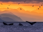sunset whales