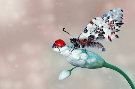 :) - red, ladybug, green, butterfly, insect, flower, white