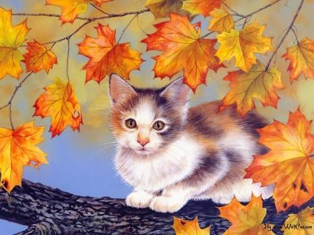 Thanksgiving Kitten Desktop Wallpaper Www Bilderbeste Com