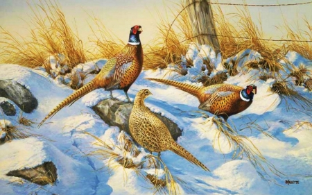 :-) - painted, nature, pheasants, snow