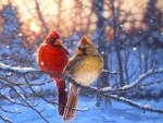 Love Birds in Winter