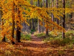 Path in a autumn forest
