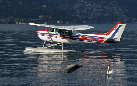 Seaplane and Swan - seaplane, swan, Italy, lake, Como