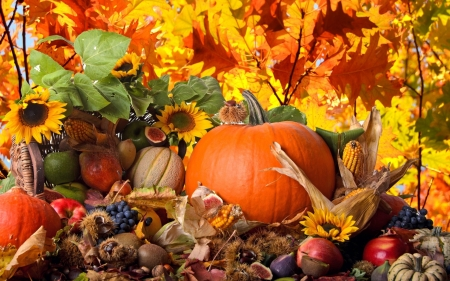 Thanksgiving for God - Thanksgiving, Orange, Pumpkins, Nuts, God, Flowers