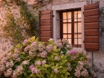 Window and Hydrangea