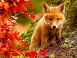 Fox In Autumn With Red leaves