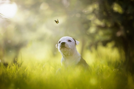 Cute puppy - Bokeh, Summer, Grass, Butterfly