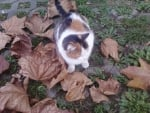 Cat and leaves