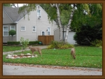 "My ""Deer"" Neighbors :D"