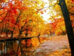 Beautiful Fall Foliage in a Park