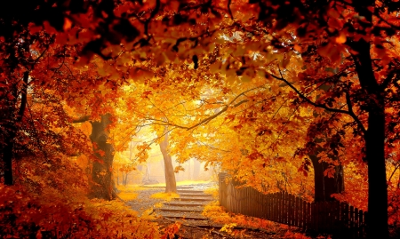 Golden autumn - rays, golden, beautiful, park, foliage, forest, fall, autumn, trees, leaves, walk