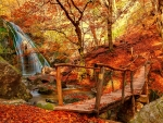 Bridge in autumn forest