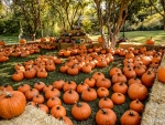 Pumpkin Patch in Texas