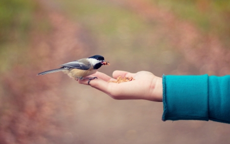 Tit on Hand - hand, bird, animal, tit, feeding