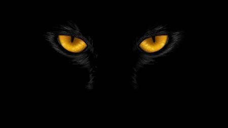 Eyes Cats Animals Background Wallpapers On Desktop Nexus Image 2441403