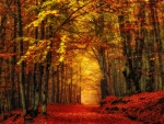 Autumn path in forest