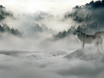 Wolves In Mountains and Fog