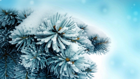 ✿ - hd, nature, pine needles, snow