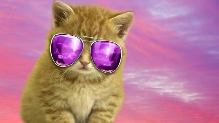 Cool Cat Cats Animals Background Wallpapers On Desktop Nexus Image 2442248