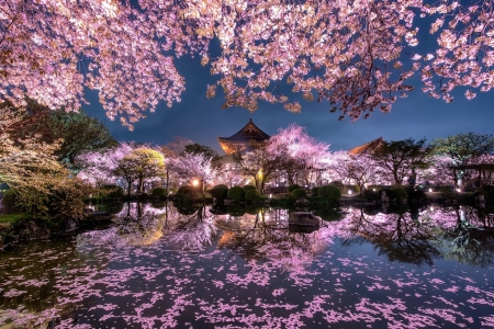 Sakura Scenery - japanese, shrine, temple, spring, pink, cherry blossom, sakura, lake, japan, scenery, night