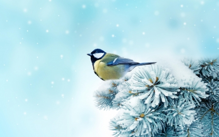 Little Bird - Snow, Trees, Bird, Winter