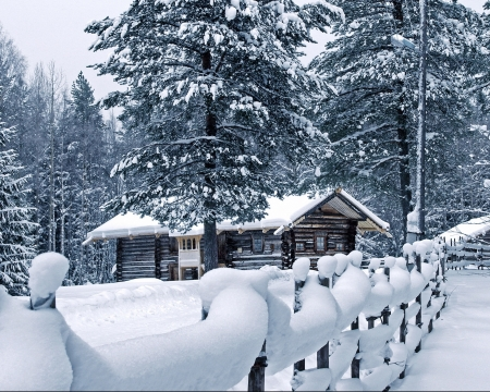 Winter House - Trees, Snow, Pines, Fence