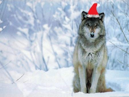 Wolf Santa