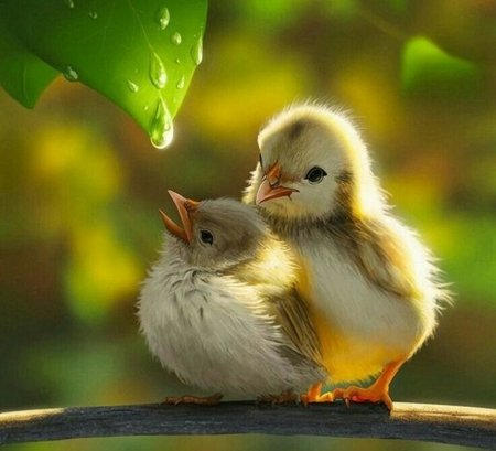 Nature birds animals background wallpapers on desktop - Hd pics of nature with birds ...