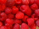 Lovely raspberries