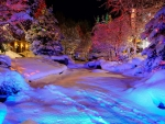 Winter Colorful Christmas