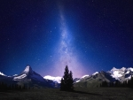 Tree contrasted against snowy mountains and star-filled sky