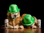 Irish Dogs