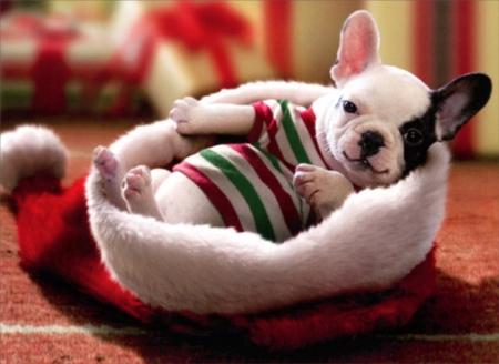 Puppy Sitting In Santa Hat - Dogs & Animals Background Wallpapers on Desktop Nexus (Image 2446402)