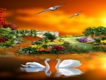 sunset-romance-beautiful-cute-flowers-yards-pretty-birds-swans-couples-wallpaper-pictures-