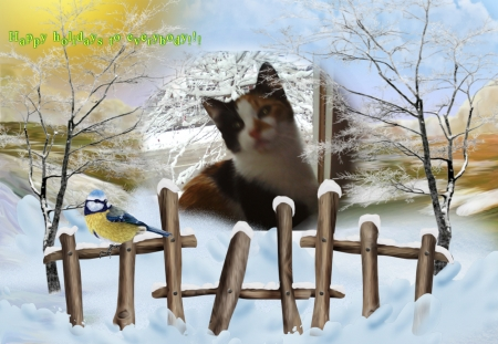 holiday - cute, holiday, cats, winter