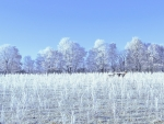Deer in Winter Field