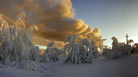Beautiful Clouds In Winter - Beautiful, Trees, Clouds, Winter, Snow