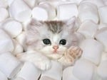 Marshmello Kitty