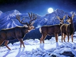 Moonlight mulies