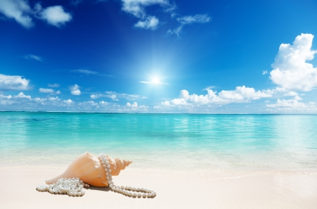 Beach - beach, seashell, sunshine, sea, sand